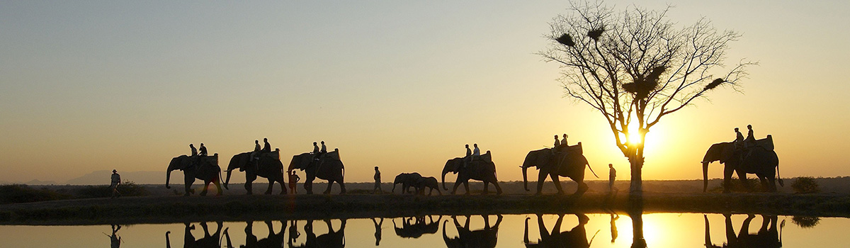 elephant-safari-sunset-e1368624400480