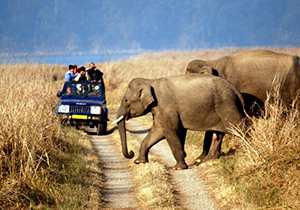 weekend-delhi-to-jim-corbett-tour-packages-by-car
