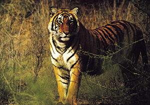 Golden Triangle With Ranthambhor Wildlife Tour From Delhi Car Rental